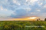 63893-03717 Sunrise and prairie Prairie Ridge State Natural Area Marion Co. IL