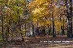 63895-16507 Cabin at Log Cabin Village in fall Kinmundy IL