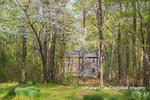 63895-15810 63895-158.02 Cabin at Log Cabin Village in spring Kinmundy IL