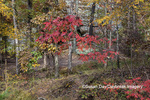 63895-16117 Fall color Garden of the Gods Recreation Area Shawnee National Forest IL