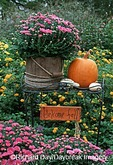 63821-11916  Fall Garden display, Marion Co., IL