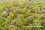 63874-00208 Aerial view of forest in spring Marion Co. IL