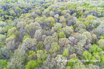 63874-00209 Aerial view of forest in spring Marion Co. IL
