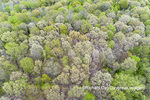 63874-00211 Aerial view of forest in spring Marion Co. IL