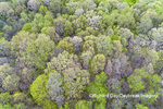 63874-00212 Aerial view of forest in spring Marion Co. IL