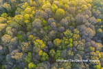 63874-00214 Aerial view of forest in spring Marion Co. IL
