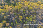 63874-00217 Aerial view of forest in spring Marion Co. IL