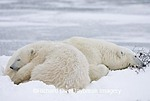 01874-10713 Polar Bears (Ursus maritimus) mother and cub Churchill, MB Canada