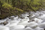 66745-03816 Middle Prong of the Little River in spring, Tremont Area, Great Smoky Mountain National Park, TN