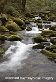 66745-03820 Roaring Fork in spring, Roaring Fork Motor Trail, Great Smoky Mountain National Park, TN