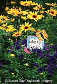 63821-18316 Purple Wave Petunias, Black-eyed Susan (Rudbeckia hirta 'Indian Summer') & Butterfly Garden sign, Marion Co. IL