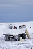 01874-11209 Polar bears (Ursus maritimus) near Tundra Buggy, Churchill, MB