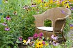 63821-206.11  Wicker chair and birdhouse  in garden with Black-eyed Susans (Rudbeckia hirta) Butterfly Bush (Buddleia davidii), Purple Coneflowers (Echinacea purpurea), Gray-headed Coneflowers (Ratibida pinnata) and Pink Bee balm (Monarda fistulosa) Marion Co. IL