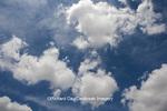 63891-02419 Cumulus clouds in blue sky, Marion Co., IL