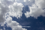 63891-02505 Cumulus clouds in blue sky, Marion Co., IL