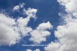 63891-02506 Cumulus clouds in blue sky, Marion Co., IL