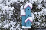 01715-03101 Blue & pink birdhouse near Inkberry bush in winter, Marion Co., IL