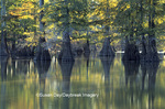 63895-05314 Bald Cypress (Taxodium distichum) trees Horseshoe Lake SP   IL