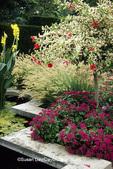 65012-03815 New Look Violet Pentas (Pentas lanceolata), Hibiscus, Yellow Canna, Penisetum sp. Grass, Swift Family Garden, Missouri Botanical Garden,  MO