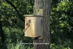 01298-02015 Tufted Titmouse (Baeolophus bicolor) predation of nest box, Marion Co.   IL
