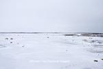 01874-13201 Polar Bears (Ursus maritimus)  Churchill Wildlife Management Area, Churchill, MB