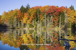 64776-01208 Pond in fall color Alger County Upper Peninsula Michigan