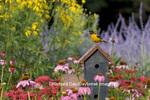 01611-07418 Baltimore Oriole (Icterus galbula) female on decorative birdhouse in flower garden, Marion Co. IL