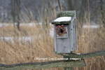 01715-02802 Bird nest box with holiday wreath in winter, Marion Co. IL