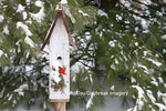 01715-02816 Bird nest box with holiday swag in winter, Marion Co. IL