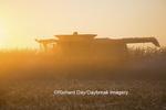 63801-06710 John Deere combine harvesting corn at sunset, Marion Co., IL