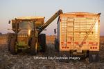 63801-06809 Grain wagon unloading corn into semi trailer in corn field, Marion Co., IL
