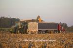 63801-06810 Grain wagon unloading corn into semi trailer in corn field, Marion Co., IL