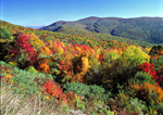 Shenandoah National Park in the autumn is at peak color in mid October. Many tourists come to motor on the famous Skyline Drive, to see the colors of fall.