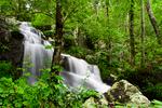 Ephemeral Falls at mm 2, Shenandoah National Park, Virginia; USA;  {Appalachian Mountains, Blue Ridge Mountains}; Skyline Drive; north section district, Mile Marker 2, early spring, mid April, Shenandoah NP Waterfalls0112.CRW