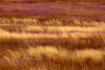 Big Meadows in winter, early spring March, Shenandoah National Park, Virginia, USA, Appalachian Mountains, Blue Ridge Mountains, SHEN012152zs.tif