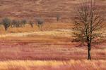Big Meadows in winter, early spring March, Shenandoah National Park, Virginia, USA, Appalachian Mountains, Blue Ridge Mountains, SHEN012153.CR2