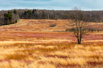 Big Meadows in winter, early spring March, Shenandoah National Park, Virginia, USA, Appalachian Mountains, Blue Ridge Mountains, SHEN012170.CR2