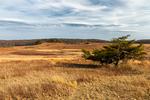 Big Meadows in winter, Shenandoah National Park, Virginia, USA, Appalachian Mountains, Blue Ridge Mountains, SHEN013415.CR2
