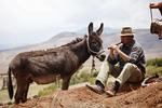 farmer, relaxing playing Andean flute, granger; farmhand, farm hand, field hand, farming; potato; cooking in earth earthen oven, Maras; Andes Mountains; Peru, South America, PERU23353.jpg