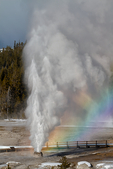 Beehive Geyser with rainbow, irregular but spectacular shoots a concenrated spot up to 180 feet into the air; Upper Geyser Basin,  Old Faithful Area, Yellowstone National Park, Wyoming, USA; YELL3B3078sd.tif