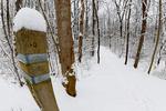 Dickey Ridge Trail in Shenandoah National Park, North Entrance,  Winter season, snow, cold, Virginia, USA, Appalachian Mountains, Blue Ridge Mountains; SHEN011951c.TIF