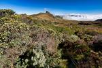 Los Nevados National Park, Nevado del Ruiz, paramo, central Andes, high altitude paramo, Termales del Ruiz, Colombia, South America; COLU111084_P.jpg