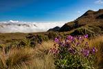 Los Nevados National Park, Nevado del Ruiz, paramo, central Andes, high altitude paramo, Termales del Ruiz, Colombia, South America; COLU111099_P.jpg
