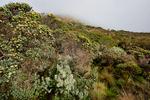 Los Nevados National Park, Nevado del Ruiz, paramo, central Andes, high altitude paramo, Termales del Ruiz, Colombia, South America; COLU111114_P.jpg