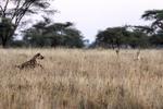 Tanzania, East Africa, Africa; TZ5600.CR2