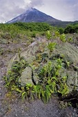 VOLCAN ARENAL & LAVA FIELD SHOWING PLANT SUCCESSION, COSTA RICA