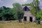 DEER IN FIELD BY DELAPIDATED LIMESTONE BLOCK FARMHOUSE, CENTRAL TEXAS
