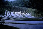FLOODED RICE TERRACES READY FOR PLANTING, PUPUAN, BALI, INDONESIA