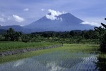 GUNUNG AGUNG, BALI'S MOST SACRED MOUNTAIN & NEWLY-PLANTED RICE, INDONESIA