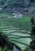 RECENTLY-PLANTED RICE PADDIES ADJOINING A SMALL KAMPONG, WEST SUMATRA, INDONESIA